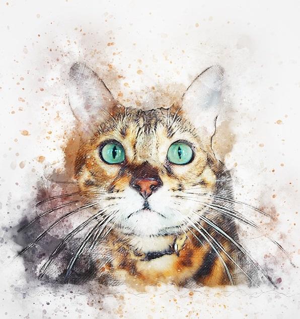 Racconto: Dove se ne vanno a morire i gatti – Lisa Malagoli